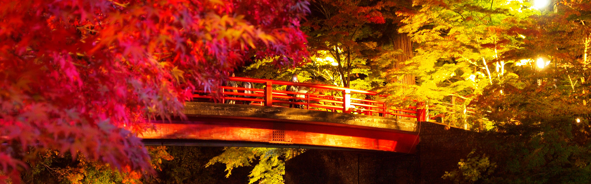 momiji night illumination