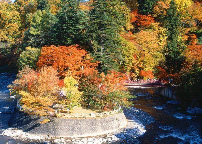 Nakano Maple Mountain Autumn Foliage and Night Illumination